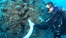 Nettoyage du Tombant par méthode d'aspiration - Zone avant aspiration  - Cleaning of the Spélugues coral reef using suction technique - Before suction